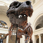 Field Museum of Natural History (Tyranasarus Rex Sue)